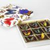 Xocao caja 9mariposas-2 $649_web